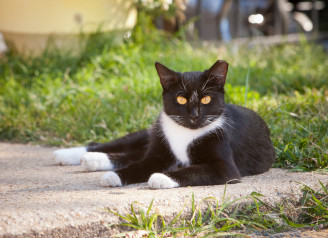Free-roaming_cats_that_have_already_been_spayed_or_neute