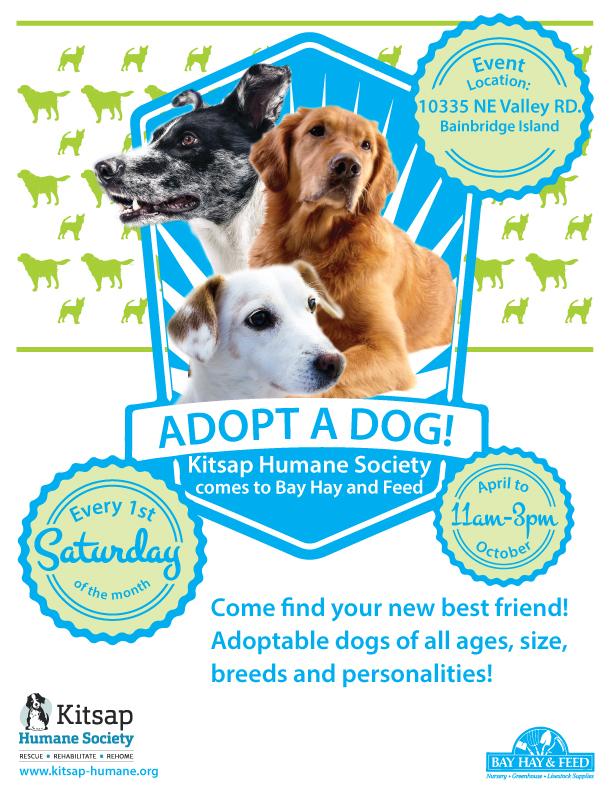 Toledo Dog Adoption Event