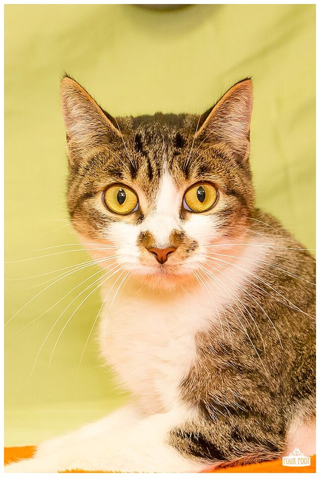 Kitsap Humane Society Khs Kitties Go To Prison
