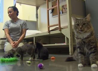 635833152615406796-prison-kittens3