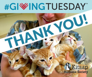 FB-Promotional-Giving-tuesday-thank-you