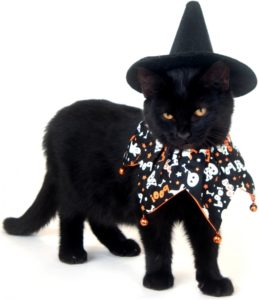 cats-dressed-up-in-costumes-for-halloween-1