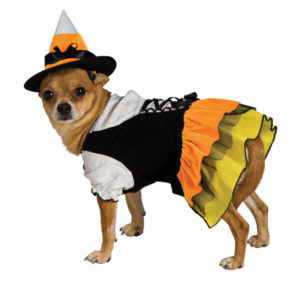 candy-corn-witch-dog-halloween-costume-1