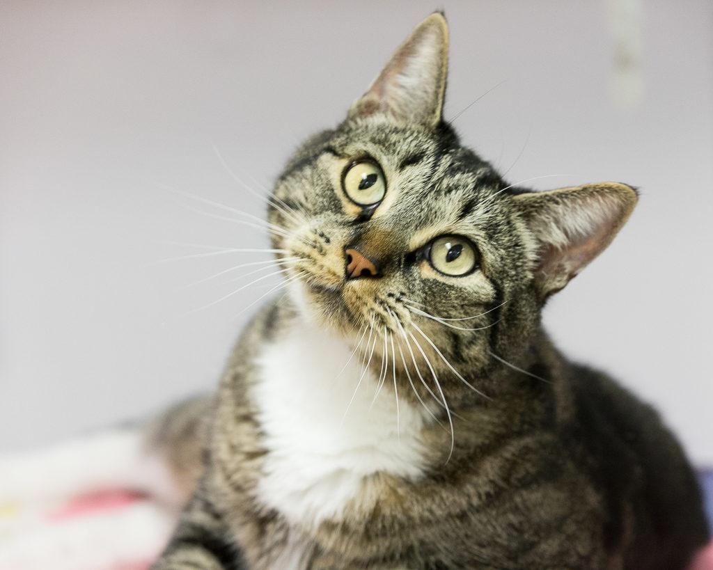 Bud, CAT 39
