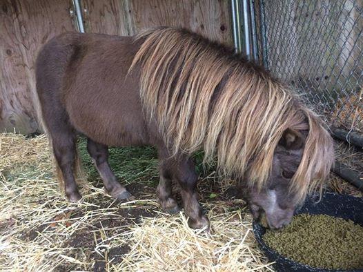 mini-pony