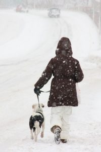 snow-dog-walk