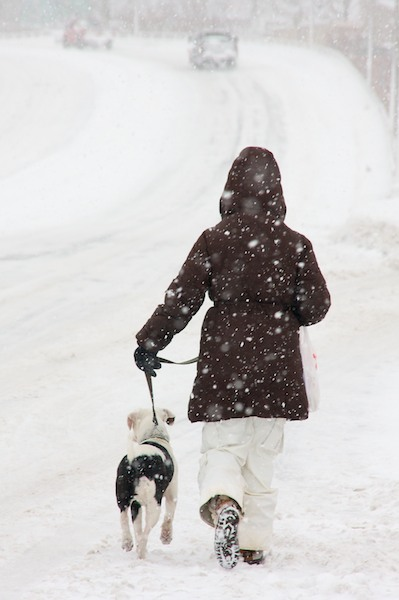 8 Steps to Walking the Dog in the Winter - Infographic