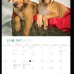 2018 Kitsap Humane Society Calendar