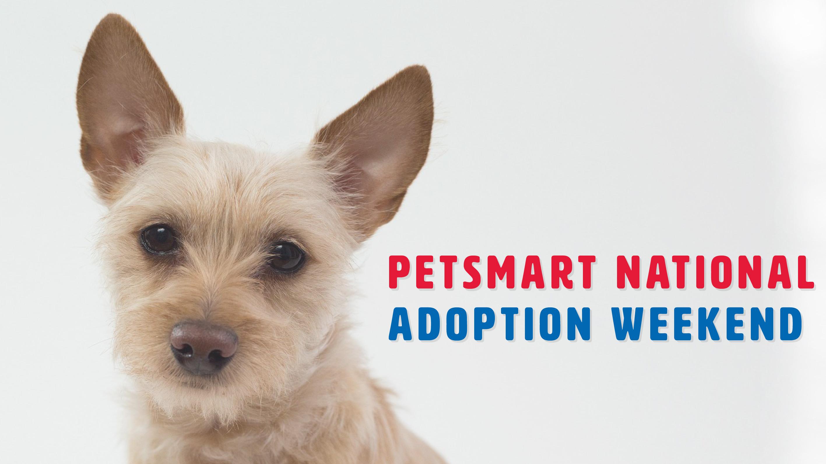 Kitsap Humane Society Petsmart National Adoption Weekend!