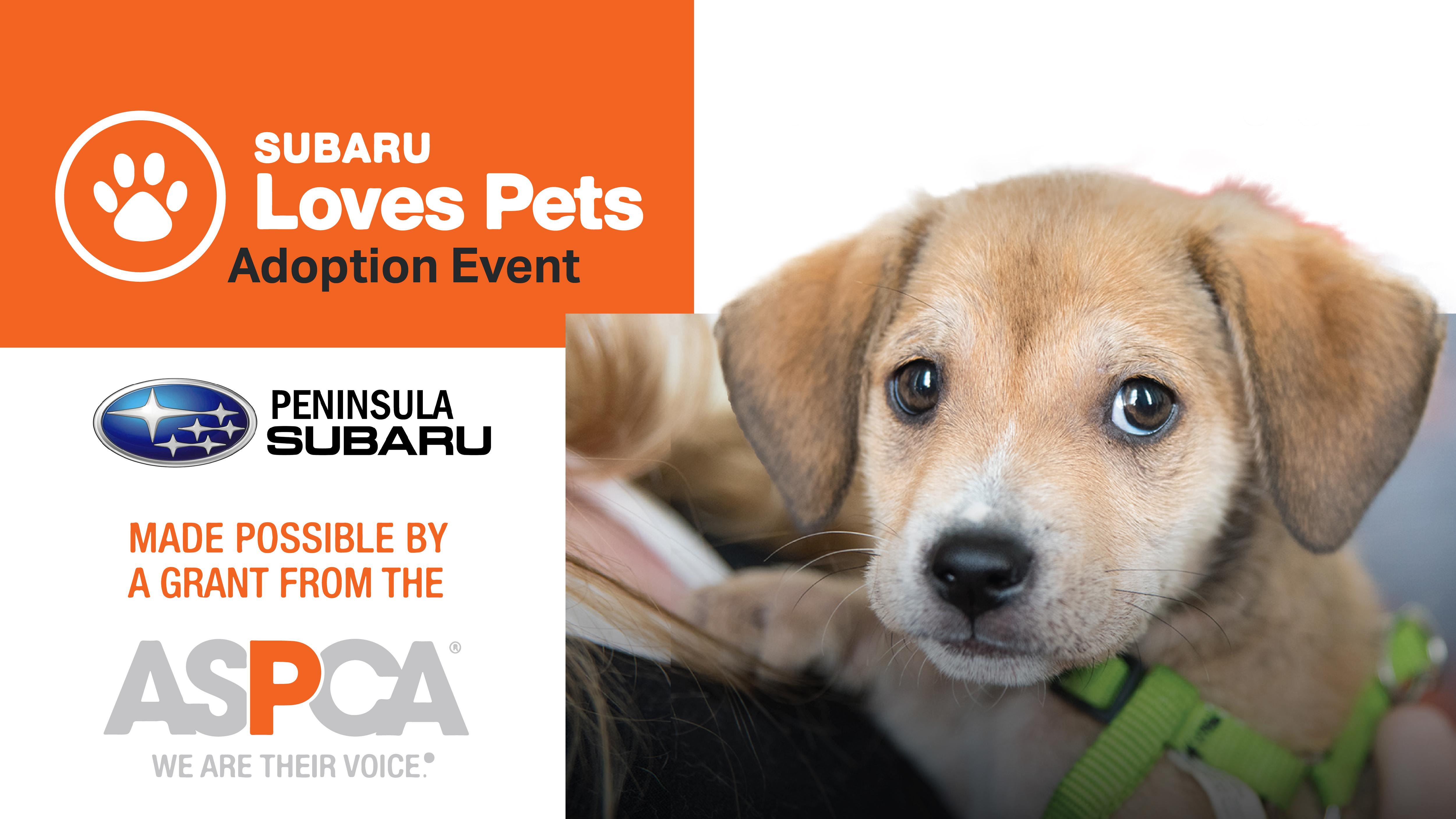 Kitsap Humane Society 50 Off All Adoptions Subaru Loves Pets Adoption Event